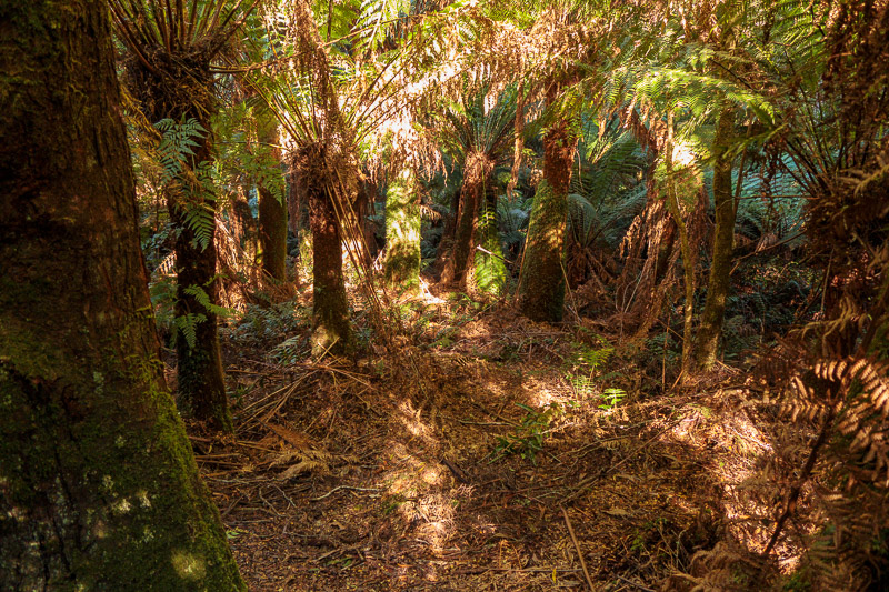 Australia-Cape Otway-Apollo Bay-Lorne - Some areas are brown and ferny. Areas such as this one.