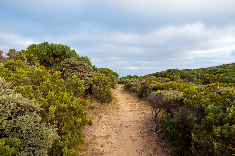 Australia-Cape Otway-Twelve Apostles-Port Campbell - Much of the Great Ocean Walk has no view of the Ocean.
