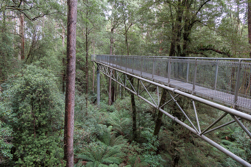 Australia-Cape Otway-Treetop Walk-Driving - Ferning about