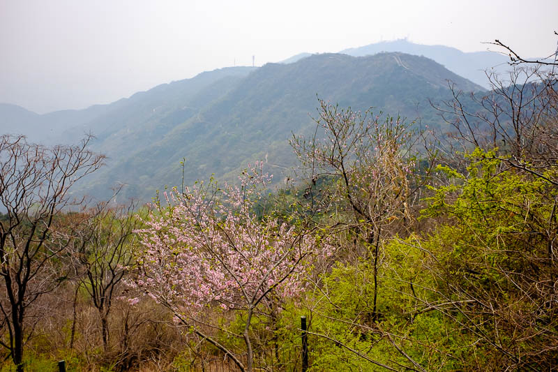China-Beijing-Fragrant Hills-Hiking - Have a bit more view, featuring blossoms.