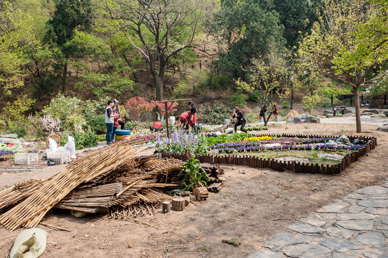 China-Beijing-Fragrant Hills-Hiking - Here are some local thugs forced to do community service gardening.