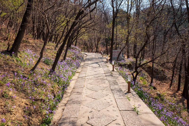 China-Great Wall-Mutianyu - The path up to the wall was very pleasant. Spring hasnt fully sprung here yet, not many leaves on the trees, but there was a snow storm of pollen and