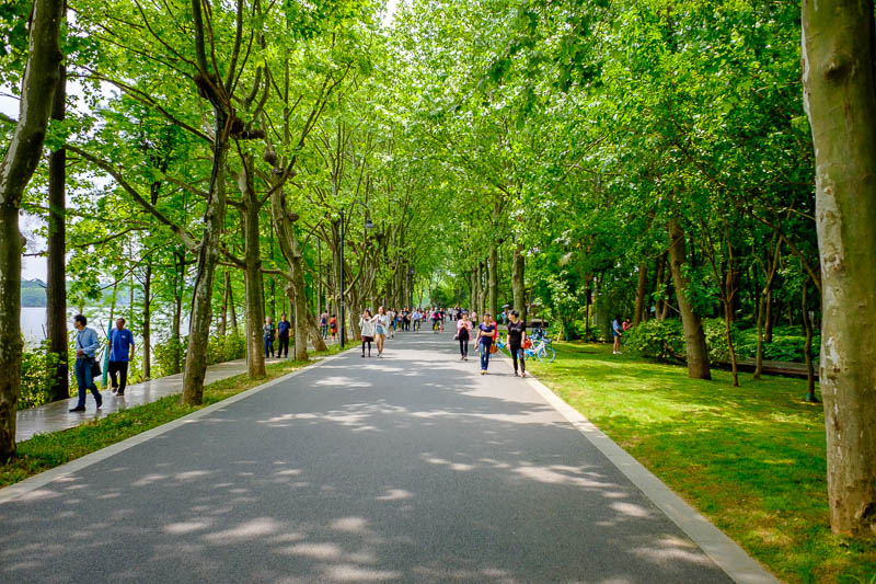 China-Wuhan-East Lake-View - The roads were lined with wonderful shade producing trees.