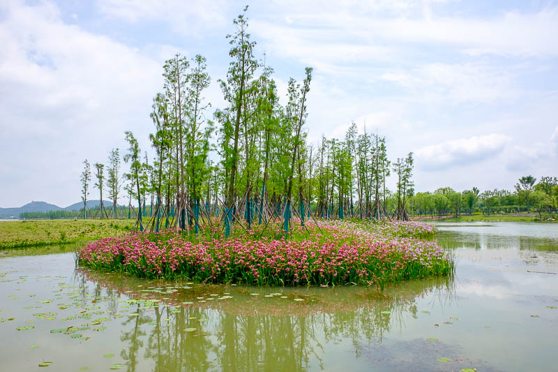 China-Wuhan-East Lake-View - No longer in the wetlands, we are now in flower island park area. There were many islands filled with flowers.