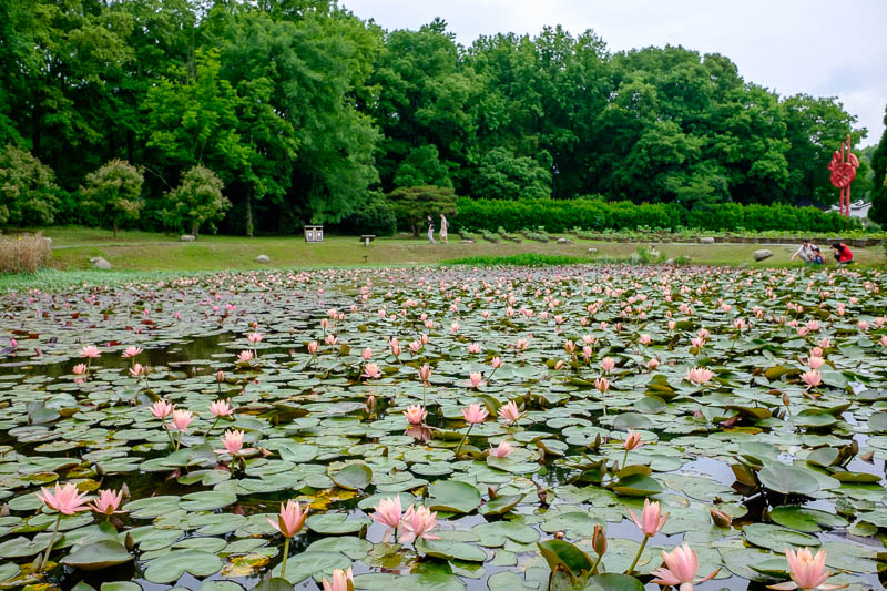 China-Wuhan-East Lake-View - Here is one of numerous lotus ponds, I think I am slightly too early. Perhaps in Hangzhou which is famous for the huge sea of lotus whatevers, they wi