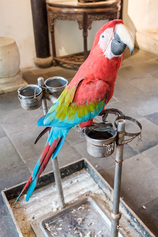 China-Shanghai-Zhujiajiao-Parrot - Many shops have a resident bird on a chain. The chain is to protect me from the bird, because I was insulting it in Chinese and it was getting angry a