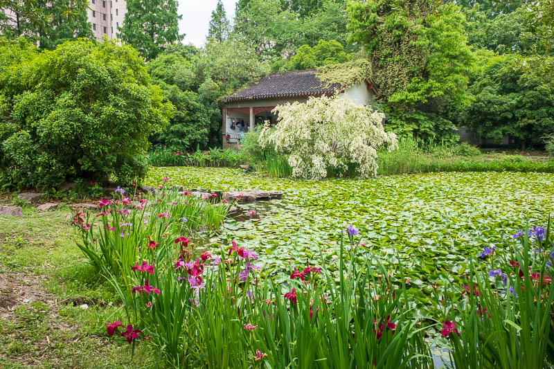 China-Shanghai-Botanic Garden-Flowers - If you run really fast you can travel over this pond on the lilies. In that little building on the other side, a huge group of old people were singing