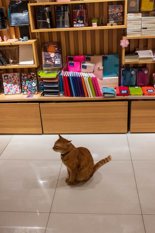 China-Shanghai-Sunshine-Architecture - Near my hotel there are a few different specialist goods streets. Musical instruments, books, trophies, curtains and stationery. Here we have a cat wh