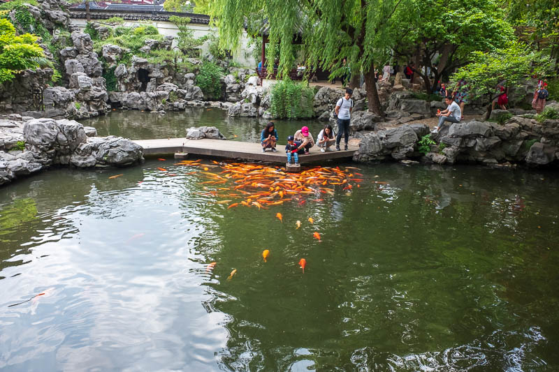 China-Shanghai-Park-Yuyuan Garden - This child was feeding his feet to the piranhas.