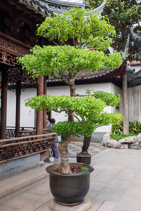 China-Shanghai-Park-Yuyuan Garden - I was again impressed with the trees here, I noted that they wrap the trunks in cloth to discourage growth.