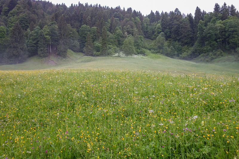 Germany-Garmisch Partenkirchen-Hiking-Zugspitze-Snow - I am glad I didnt cancel due to rain, as it was soon starting to clear up, as I passed fields of flowers.