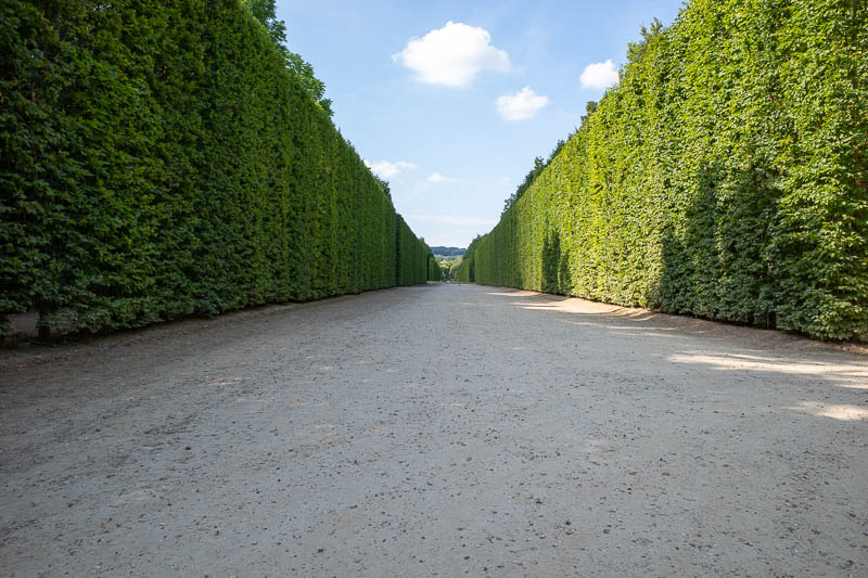 France-Versailles-Palace-Garden - The hedges are actually trees. There are wooden lattice walls embedded in them painted green to make hedging them more efficient.