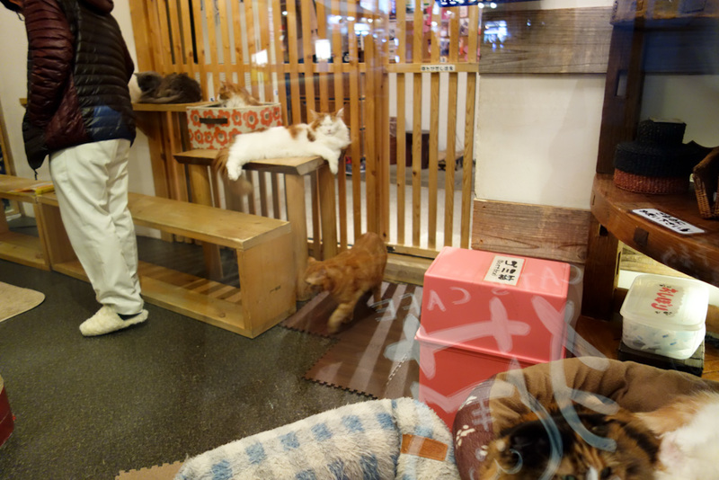 Japan-Kyoto-Shopping Street-Ramen - If you want to molest a cat, heres where you go. I didnt, as its $15 for an hour. Thats about 55 minutes and $14 too much.