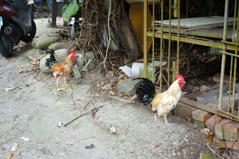 Taiwan-Taichung-Hiking-Dakeng - And a lot of chickens to give me bird flu.