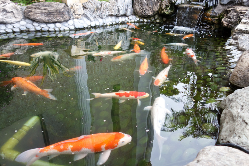 Taiwan-Taichung-Garden-Beef - A new one for me, the footpath has been replaced with a goldfish pond.