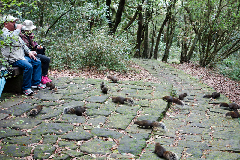 Taiwan-Taipei-Hiking-Yangmingshan - OMG squirrels, everywhere. People feed them by hand.