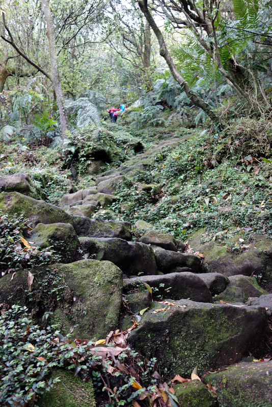 Taiwan-Taipei-Hiking-Yangmingshan - Most of the climb is steps like this. Very steep, quite slippery. I have shorts and a t-shirt. Lots of locals were quite concerned for me, but I estim