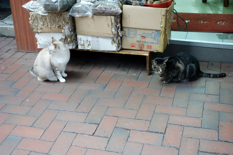 Hong Kong-Mall-Mong Kok - A couple of the shop cats mentioned in the previous update. Most of the time they sit in the shops on counters and lay in wait for grandmas to come an