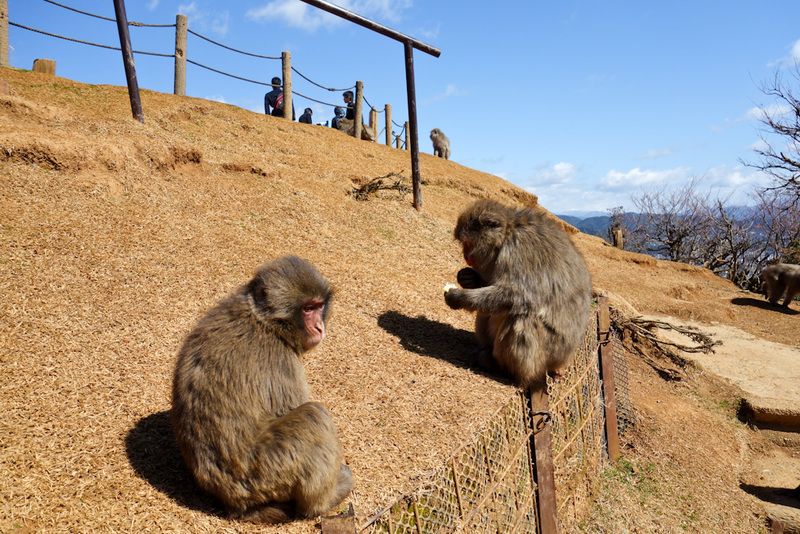 Japan-Kyoto-Arashiyama-Hiking-Bamboo-Monkeys - Now for the monkeys. A ticket is $5. Theres no mention that its a bit of a hike to get there up a mountain, I didnt mind but many others would be outr