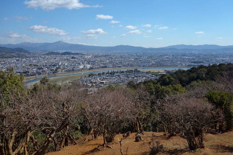Japan-Kyoto-Arashiyama-Hiking-Bamboo-Monkeys - The view from where the monkeys are fed is great, of all Kyoto. Everyone else cleared off so I had the place to myself.