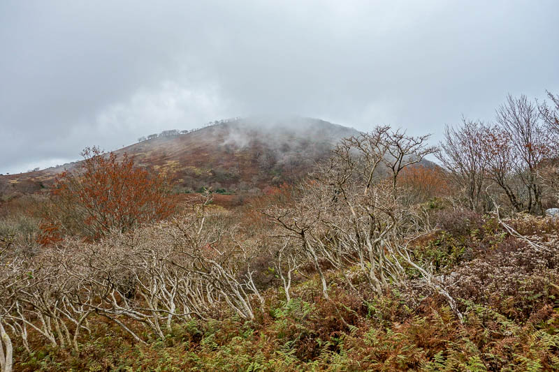 Japan-Nagoya-Hiking-Fujiwaragatake - Still have to go up the top of the bald mountain.