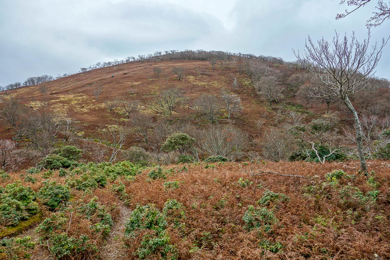 Japan-Nagoya-Hiking-Fujiwaragatake - I greatly enjoyed the relatively flat plateau area. Being between 2 peaks it was shielded from the wind.