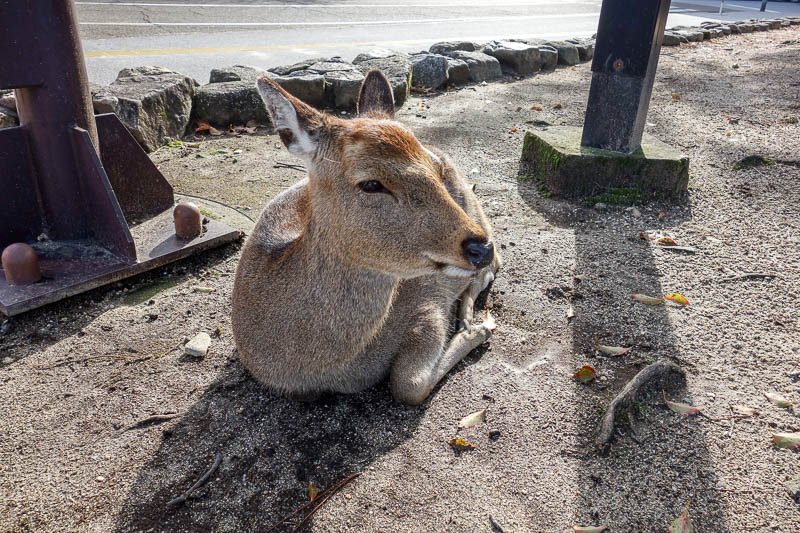 Japan-Hiroshima-Miyajima-Hiking-Mount Misen - As soon as I left the ferry terminal, my nemesis was waiting for me.
