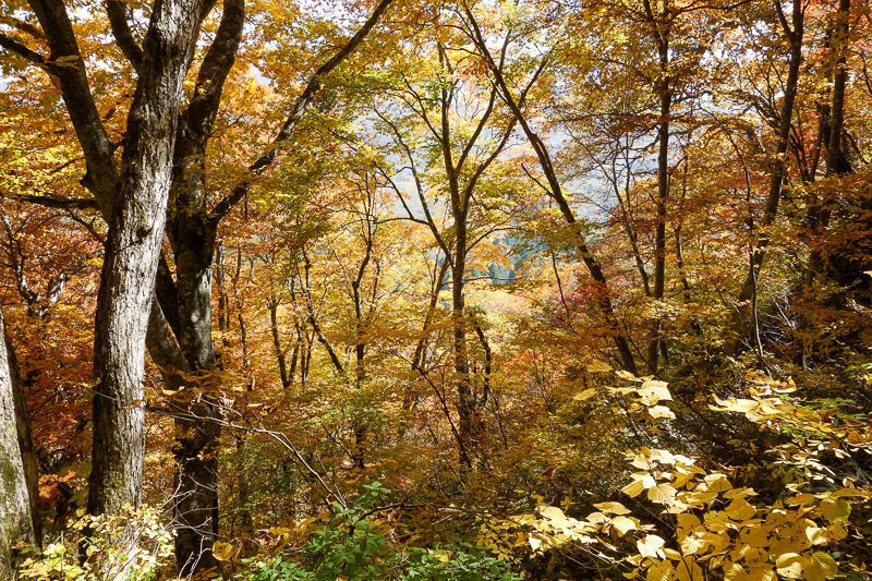 Japan-Nagano-Togakushi-Hiking-Autumn Colors - The view on the way down was worth the hassle of dirty hands.