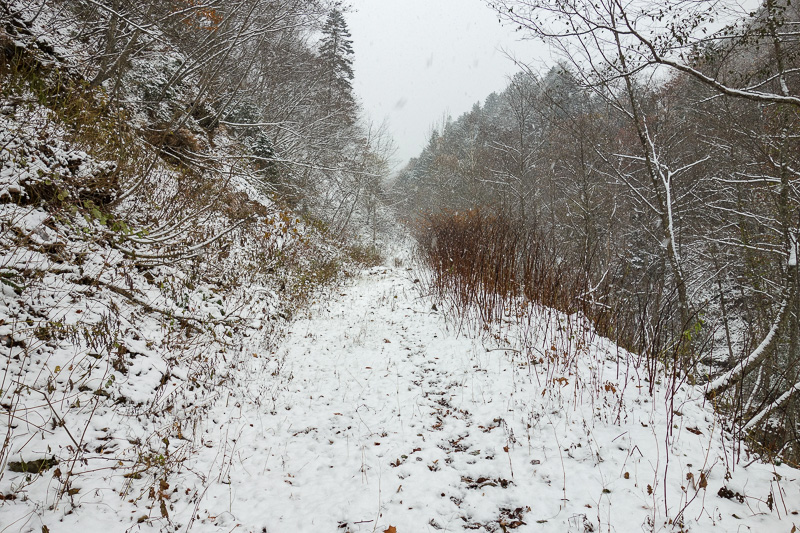 Japan-Sapporo-Hiking-Snow-Mount Soranuma - Now I thought this must surely be the right path?
