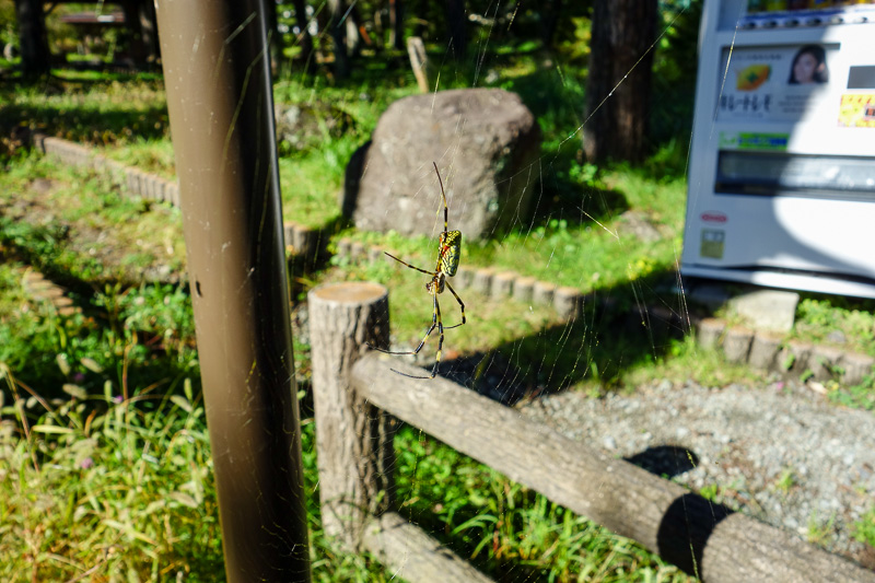 Japan-Mitsutoge-Kawaguchiko-Hiking-Shimoyama - Wildlife sighting number 2, a huge colorful spider, there are thousands of them!
