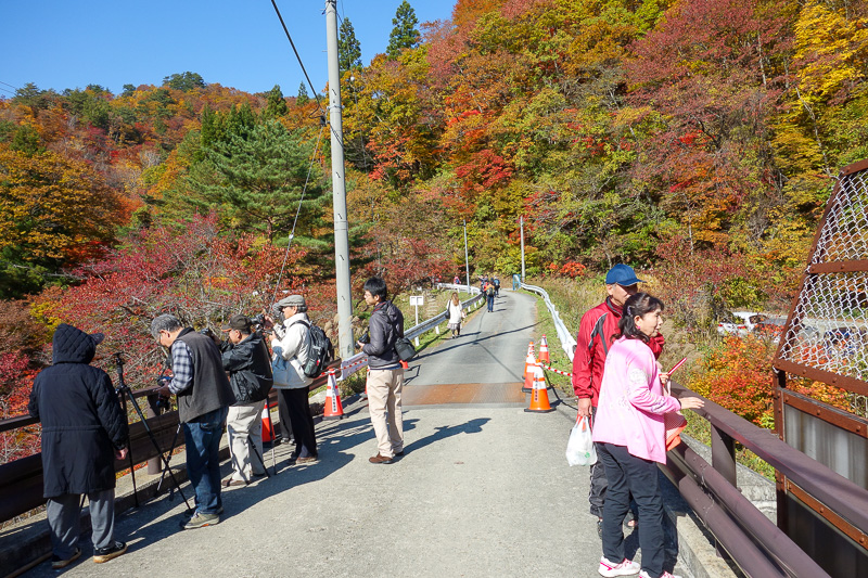Japan-Sendai-Omoshiroyama-Hiking-Yamadera - Just some of the tourists enjoying the colors. I think at least 300 people got off at the station, most are descending below this bridge into the ravi