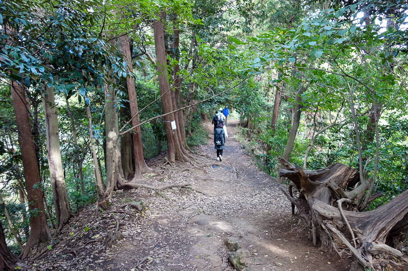 Japan-Kamakura-Hiking-Kenchoji - Very busy, but mostly flat trail.