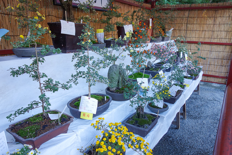 Japan-Kamakura-Hiking-Kenchoji - The temple has the Chrysanthemum festival going on like they all do. Still not as good as Nagoya last year.
