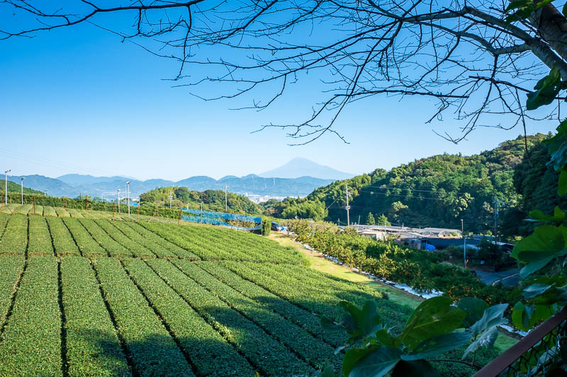 Japan-Shizuoka-Shrine-Kunozan Toshogu-Hiking - The start of the trail is once again in tea fields, complete with Fuji view, perhaps number 4 famous Shin-View?