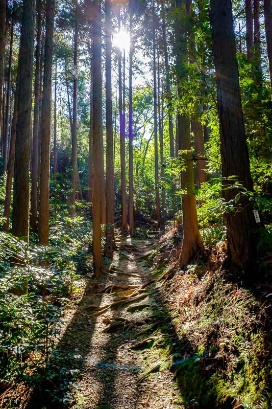 Japan-Shizuoka-Shrine-Kunozan Toshogu-Hiking - The light in the forest during the walk up to the peak was amazing, again. I stopped a number of times to appreciate the surroundings without worrying