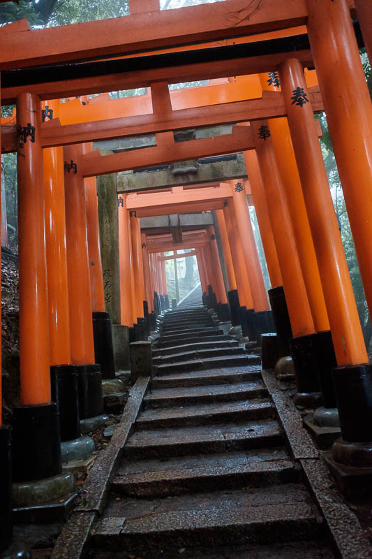 Japan-Kyoto-Fushimi Inari-Shrine-Rain - Fog! I was hoping for fog, I wanted really dense fog, I dont think I will get it. However I also noted that the whole path is lit, you can go up here