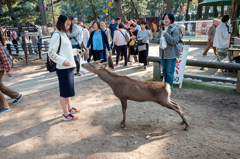 Japan-Nara-Hiking-Deer - Deer everywhere. Everyone does deer pics, I remained somewhat restrained.