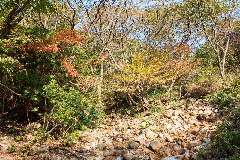 Japan-Kobe-Hiking-Mount Rokko - Some more color and a waterfall. No bears today, but there are lots of wild boars, I saw one. The locals were yelling at it and trying to video it, it