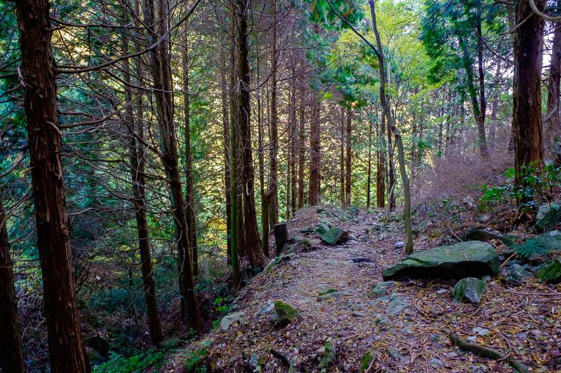 Japan-Kobe-Hiking-Mount Rokko - The long path down was great, and featured every kind of scenery, dark wooded parts, lots of streams to cross, waterfalls, colored leaves etc.