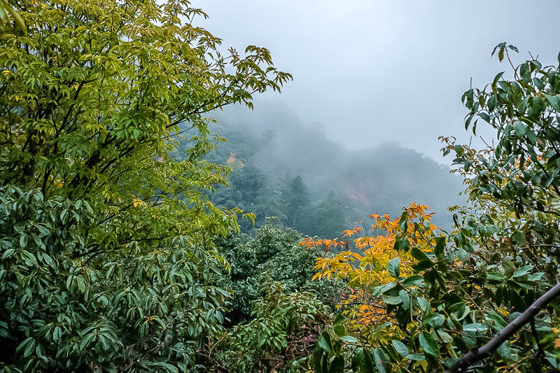 Japan-Gifu-Rain-Fog-Castle-Garden - It remained foggy my whole descent, which I enjoyed.