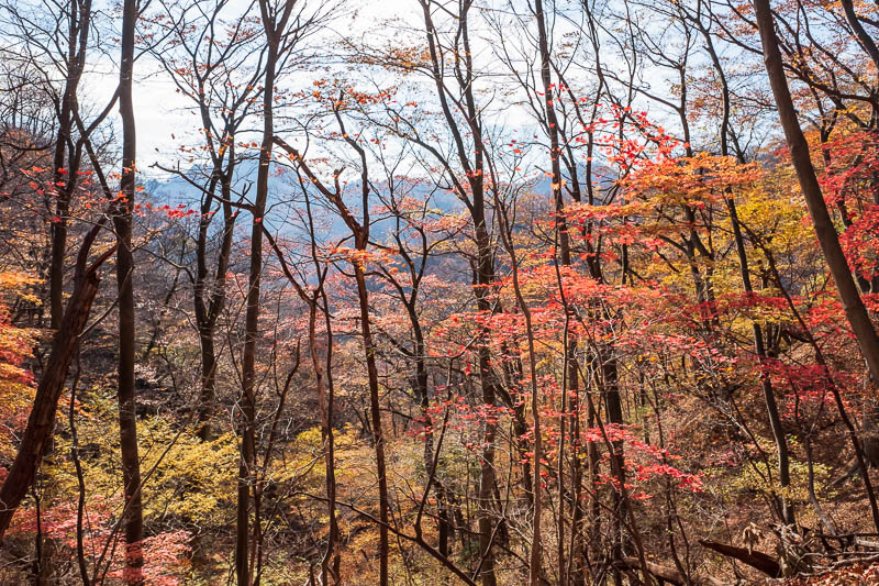 Japan-Nakasendo-Hiking-Karuizawa-Autumn Colors - Central mountain route