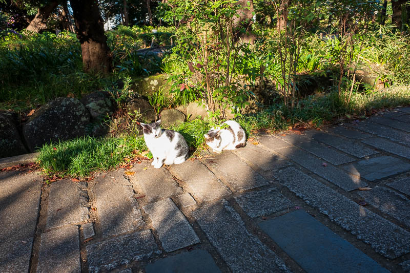 Japan-Tokyo-Ueno-Narita - These cats are squinting into the glorious sunshine.