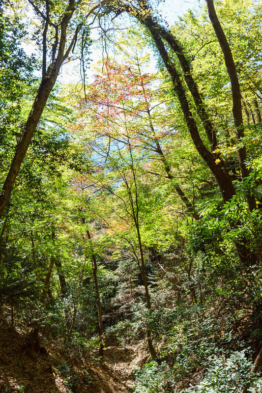 Japan-Gunma-Hiking-Mount Myogi - The lower parts were quite colorful. I was high on momoji fever.