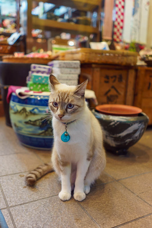 Japan-Okinawa-Naha-Food - Here we have a shop cat. His focus never shifts from the horizon. He's seen things......