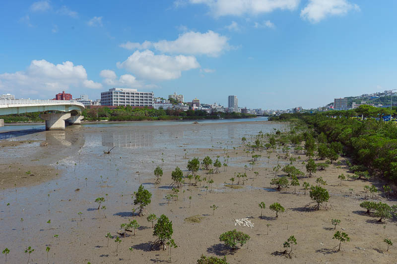 Japan-Okinawa-Naha-Navy - On my return journey I passed through some mangrove swamps. I did not see any crocodiles.