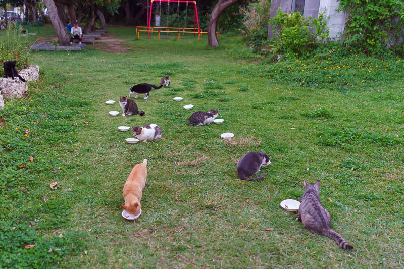 Japan-Okinawa-Naha-Beach - Here is cat island. Except its not. Its Okinawa island, with cats. Lots of cats.