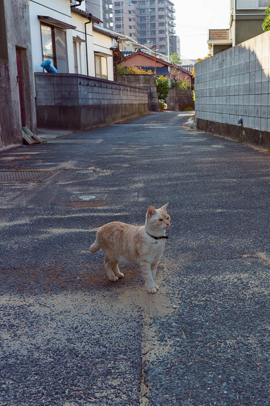 Japan-Karatsu-Castle-Hiking - Todays cat was pretty cool, very friendly, followed me for ages.