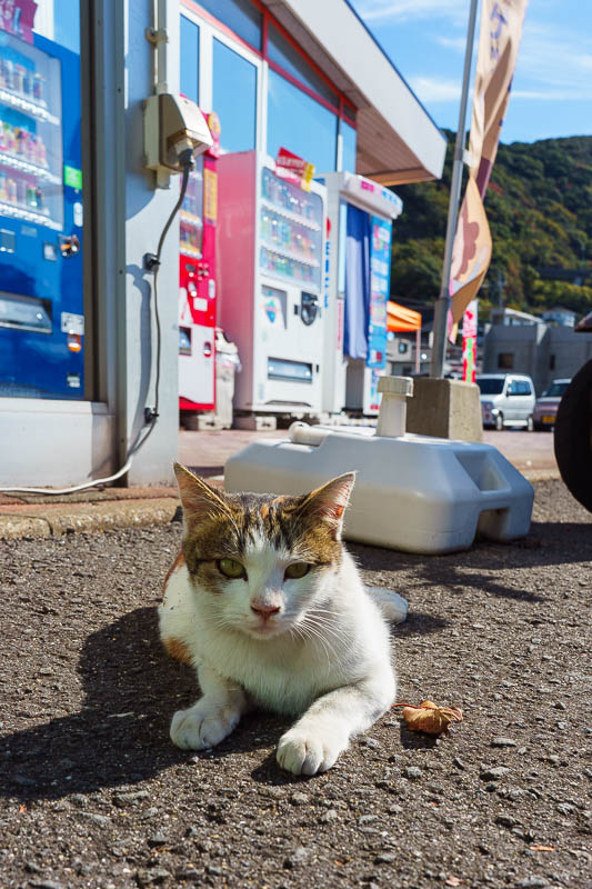 Japan-Nagasaki-Bridge-Tunnel - I found a supermarket to buy mass manufactured sushi for lunch. And I found this cat. Then more cats appeared. And eventually I had to flee! There wer