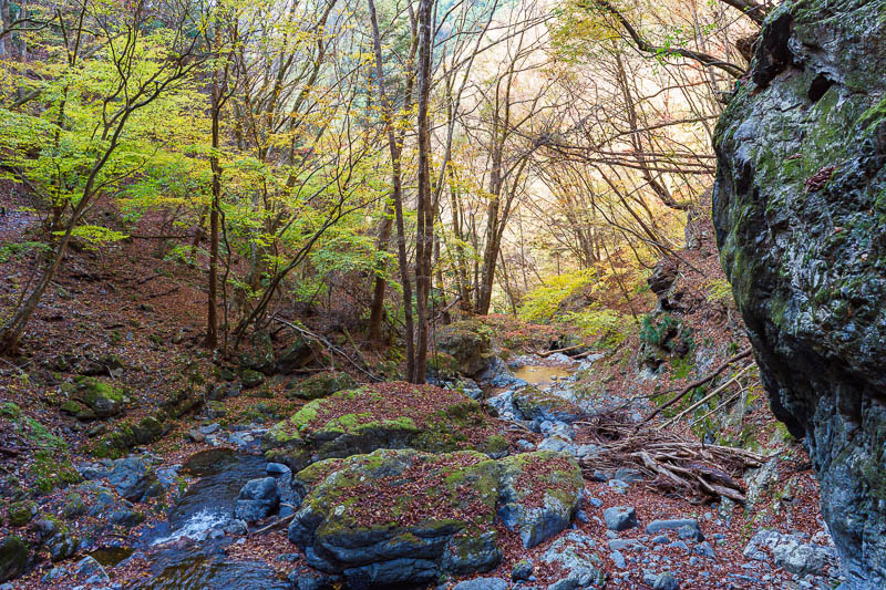 Japan-Tokyo-Hiking-Mount Kawanori - It started to get a bit mossy in the bits that get no sun, still looks great to me. Maybe I am easily impressed by leaves and rocks and streams and tr