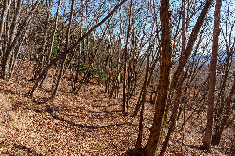 Japan-Tokyo-Hiking-Mount Kawanori - The path down started smooth and full of dead leaves and naked trees.